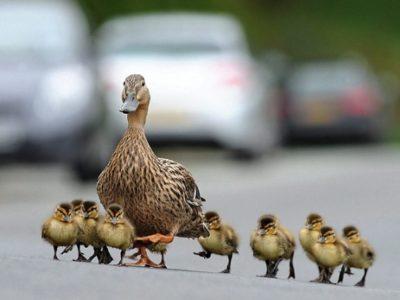 Ce faci când întâlnești o mamă cu mai mulți copii